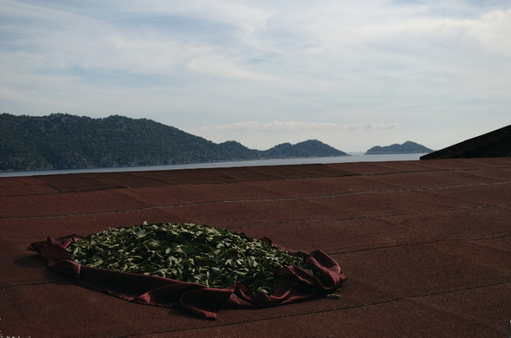 Bay leaves drying on a roof