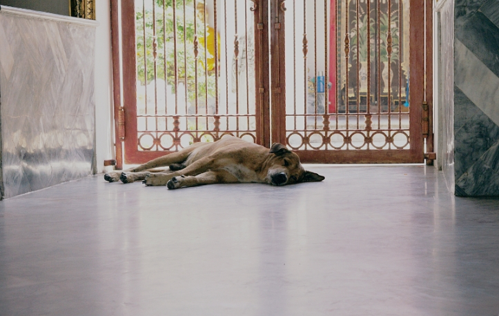Stray dog having a nap in the temple, Thailand, Bangkok