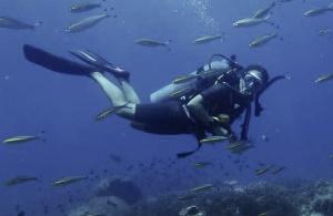 Scuba, Thailand, Koh Tao, Diving